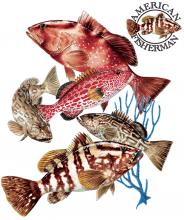 Grouper Group Of 5