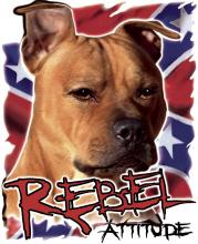 Rebel Attitude-Pitbull