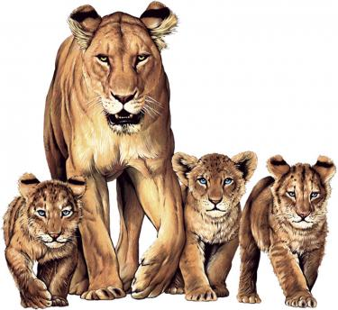 Lioness W/Cubs