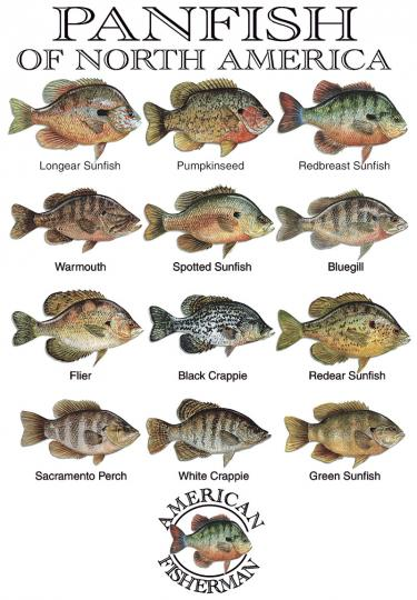Panfish Of America